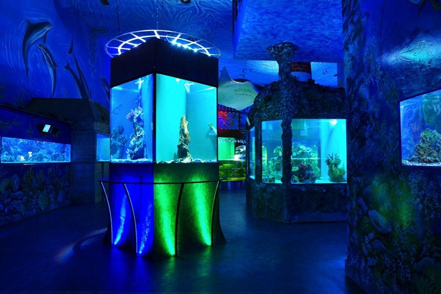 Acvariul Sea World (Sea World) [POI]