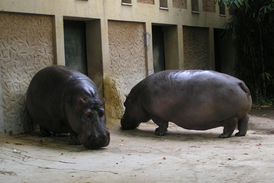 Grădina Zoologică Roma (Giardino Zoologico) [POI]