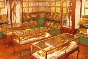 La Specola-Museo Zoologico