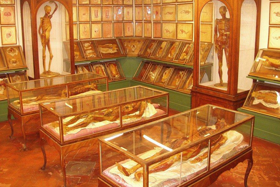 Muzeul Zoologic (La Specola-Museo Zoologico) [POI]