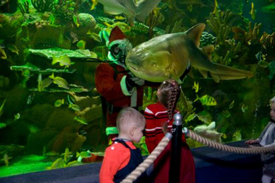 Oceanarium din Sankt Petersburg [POI]