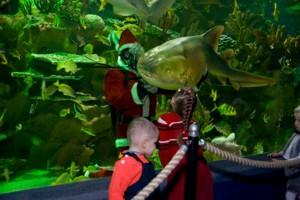 Oceanarium din Sankt Petersburg
