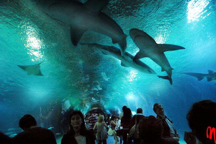 Obiective turistice importante de văzut în Valencia