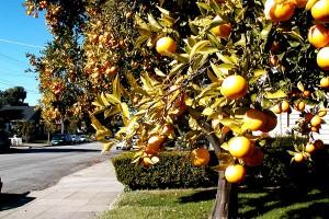 Veti gasi portocali la tot pasul