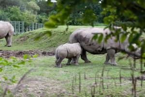 Cateva dintre animalele de la Zoo Dublin