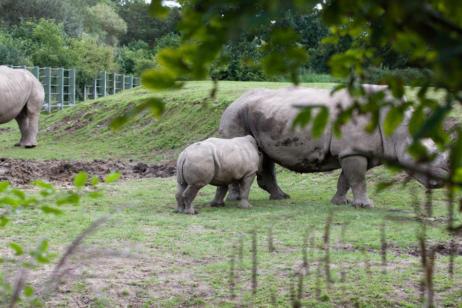 Grădina Zoologică din Dublin (Dublin Zoo) [POI]