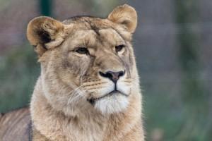 Regele gradinii Zoo din Salzburg