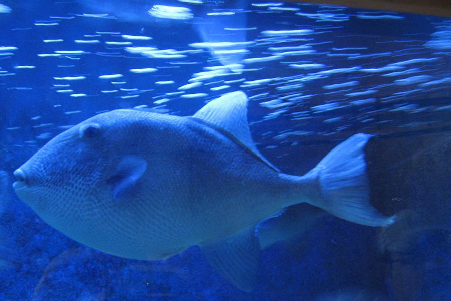 Acvariul din Dubrovnik (Aquarium Dubrovnik) [POI]